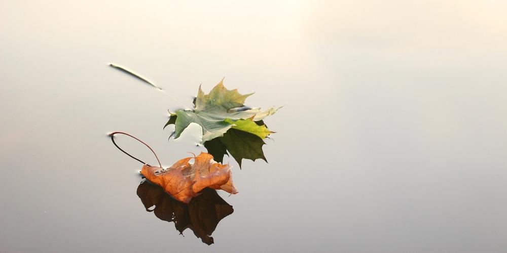 Natuur - herfst